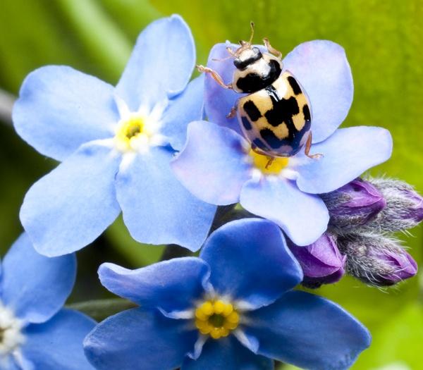 Yellow Ladybug by Ingleman