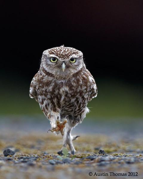 OWLympics by Austin_Thomas