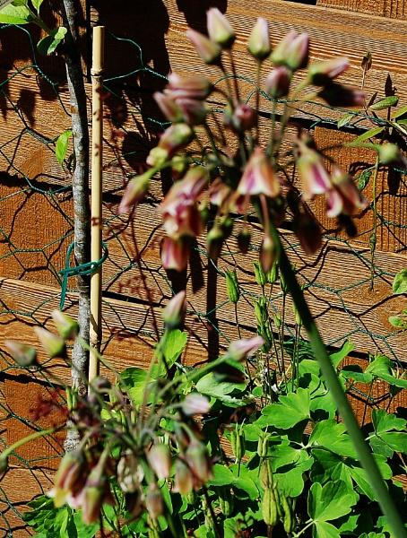 Seeking info about a flower by kopo