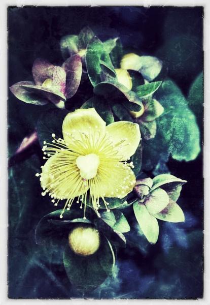 Yellow Flower by martinjp