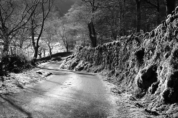 Country lane by wynn469