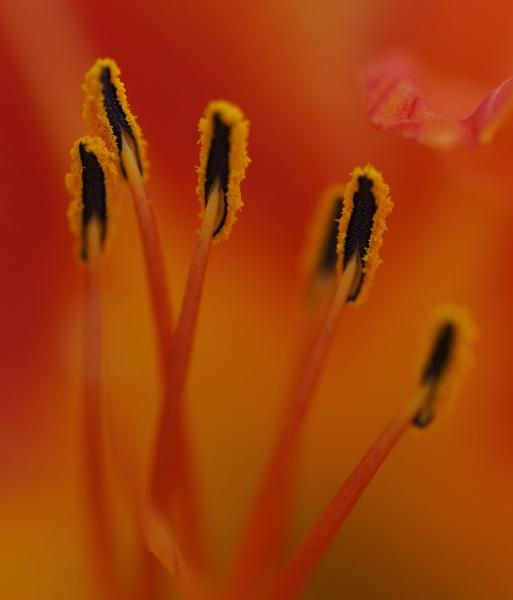 Orange by alexguja
