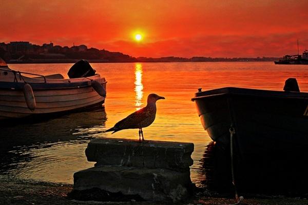 Golden Sunset by mishu78