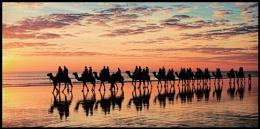 ''Sunset Camels #3''