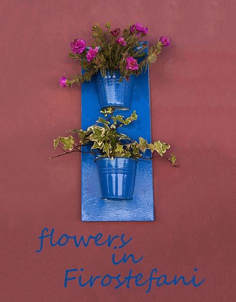 Flowers in Firostefani by Irishkate