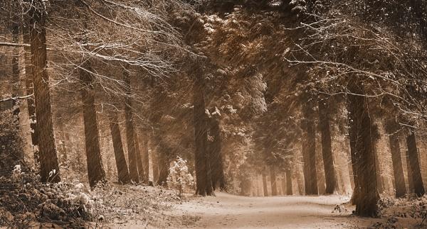 Winter Woodland Tones by Stumars