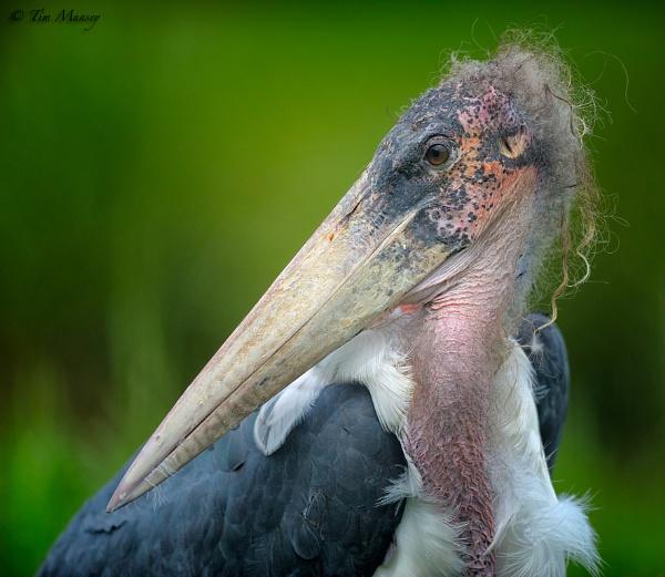 Stork raving mad! by TimMunsey