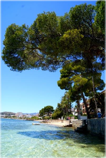 ...Majorca....Pine Walk... by Lu1989