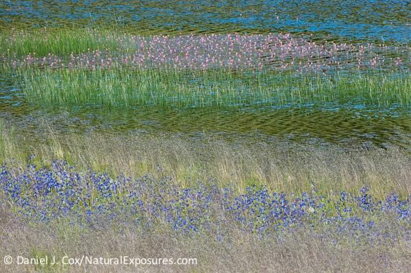 Homage to Monet, Yellowstone