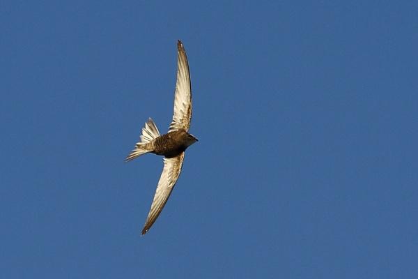 Swift by PaulB45