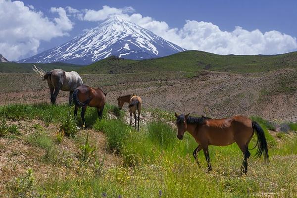 horses by saeedyounesi