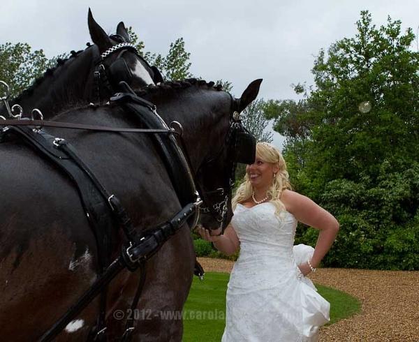 Hello horses by CarolAnnPhotos