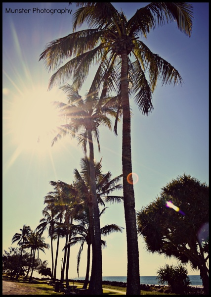 palm trees by Fairy