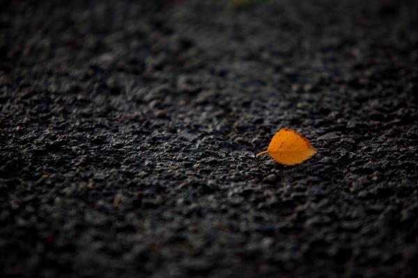 Leaf by mooncresta