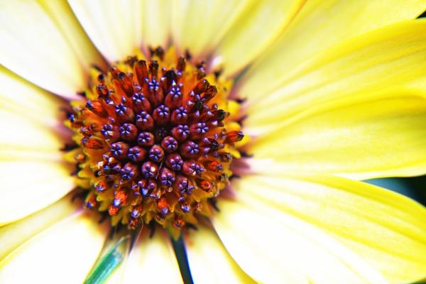 Summer Flower by jadefreeman