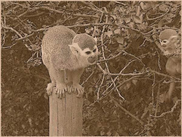 Retro Monkey by RGlover17