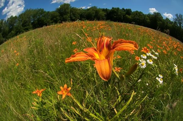 Tawney Fields by taggart