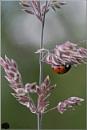 Ladybird Understudy by Paul_Iddon at 24/06/2012 - 9:50 AM