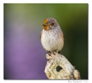 Avian Lepidopterist?