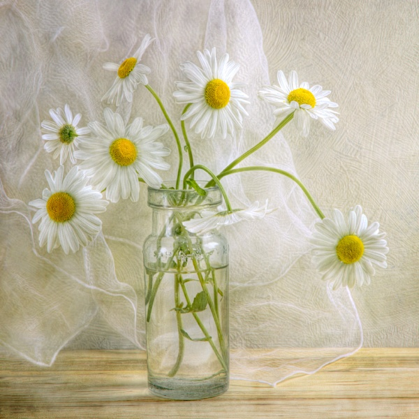 Daisies by MandyD