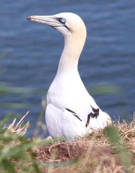 gannet by tech