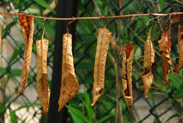 Hanging loose... by Chinga