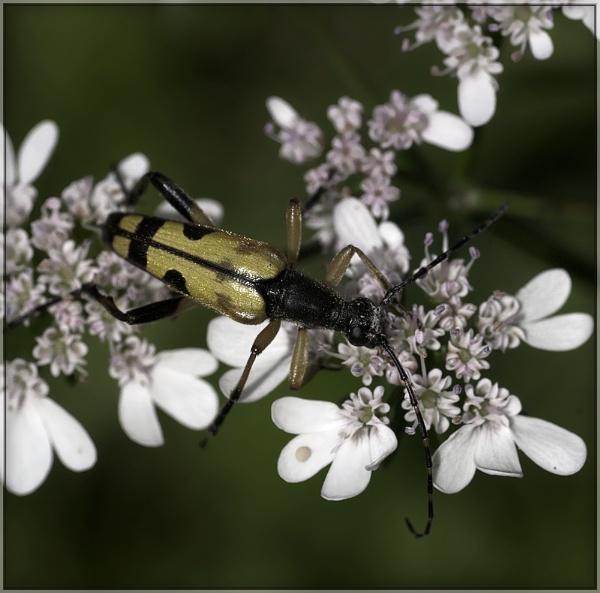 coriander under attack! by annettep38