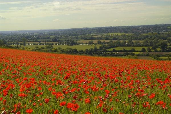 Poppy fields Boze Down by jimhellier