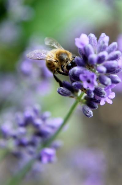 buzz off by Fatbaldhobbit