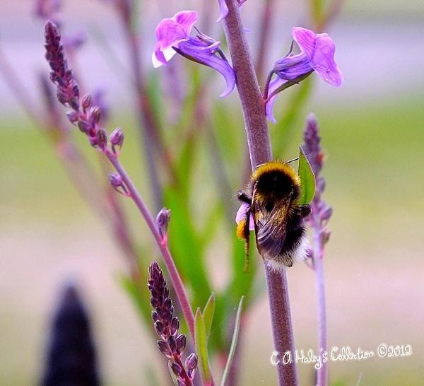 I\'ll soon Bee Off by Humblebee