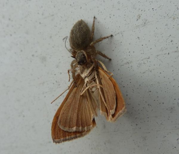 spider v moth by Bakermanz
