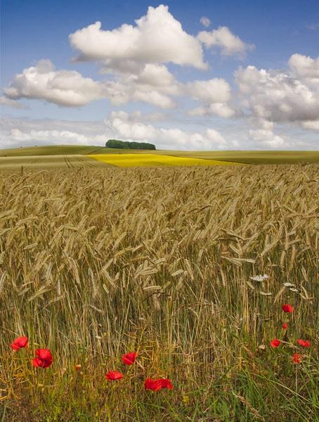 Wiltshire Summer by rogerbryan
