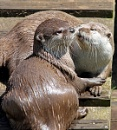 Otters by timsmith