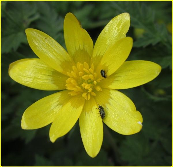 Spring Flowers Selection III by Glostopcat