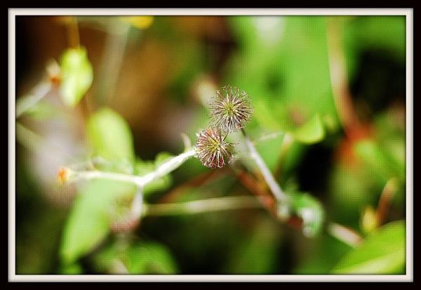 close up plants by alcartraz