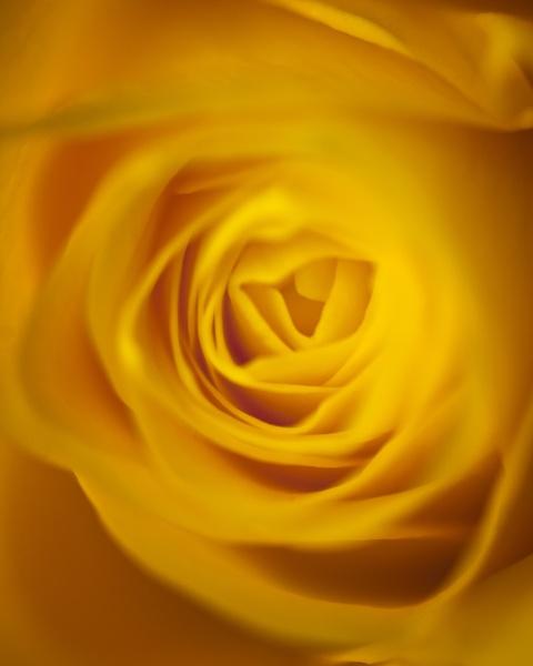 Mellow Yellow by Houndog18