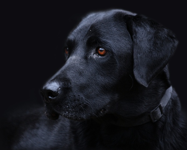 Dog by SPARROWHALL