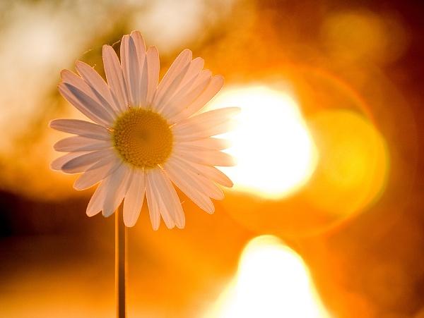 Sun, Flower by Andysnapper