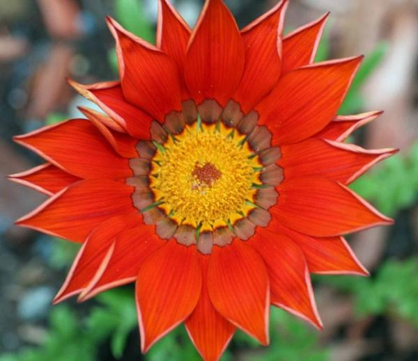 Garden flower by sanroy99
