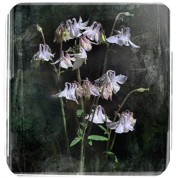 Flowerbeauty. by Cor