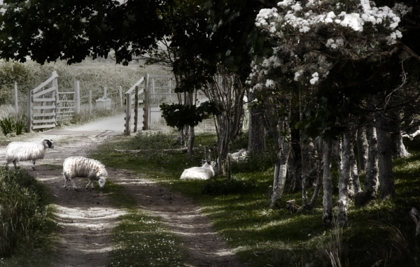 pastoral by agean
