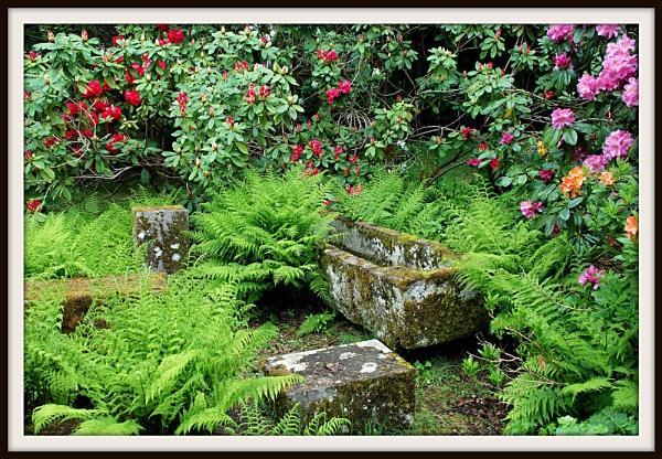 Scone Palace Gardens II