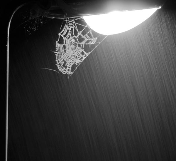 Cobweb in the rain by Artgecko