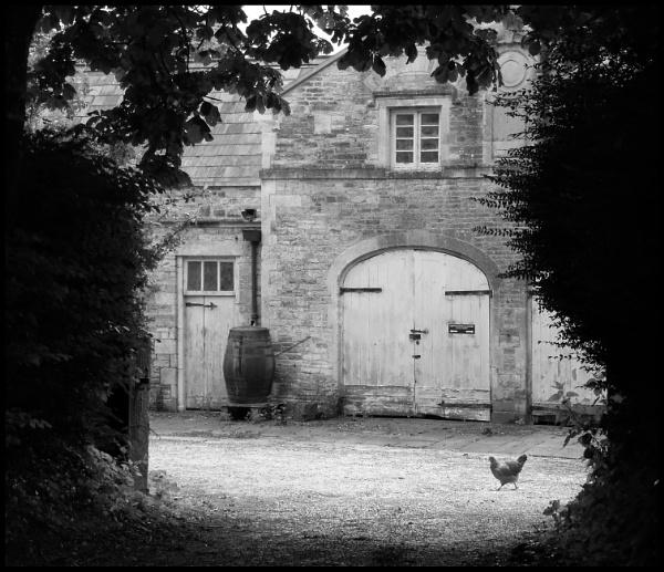 Free Range Farmyard by bwlchmawr