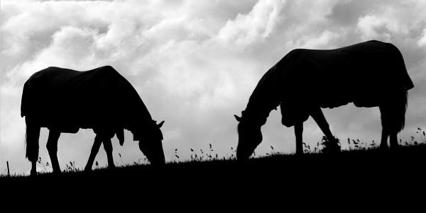 Dark horses by TT999