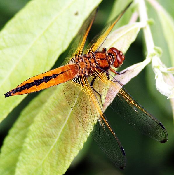 Bug by TT999