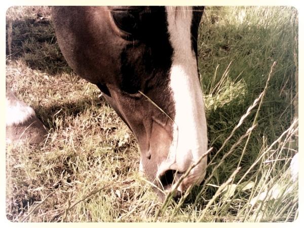 Grass Muncher by RGlover17