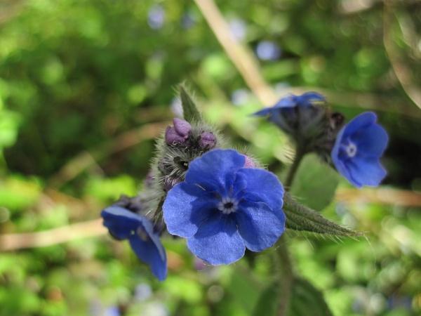Bright Blue! by Pinkreader55