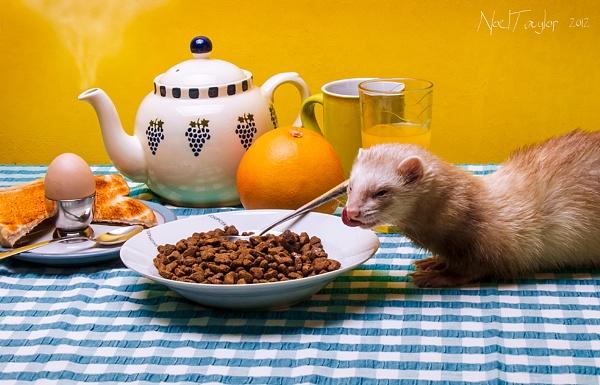 Breakfast Time by bunni_boi