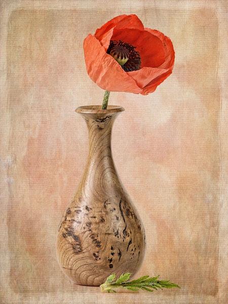 Painterly Poppy by JenniCh